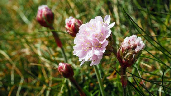 Frühlings Erwachen - Wales